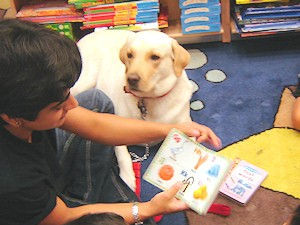 Therapy dogs assisting Dentist to reduce anxiety - Latest